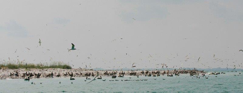 Birding Festival Egmont birds Kandz